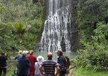 Excursão ecológica guiada pela costa e pela floresta tropical de Auckland, inclui almoço,