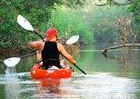 Nosara river guided kayak mangrove and environment watching tour in Guanacaste, Liberia, COSTA RICA