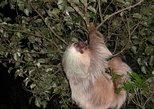 Night hike wildlife observation in Santa Elena Monteverde. Monteverde, COSTA RICA