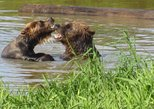 Recorrido por el Centro de Conservación de la Naturaleza de Alaska y Turnagain con paseo por el bosque templado. Anchorage, AL, ESTADOS UNIDOS
