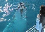 Hervey Bay Premium Whale Watching Cruise. Hervey Bay, AUSTRALIA