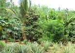 Recorrido a pie de medio día por Spice Farm, en Zanzíbar. Zanzibar, TANZANIA
