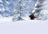 Winter Wildlife Discovery Tour, Jasper, CANADA