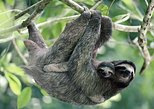 Sloths and Waterfalls Tour in the Rain Forest of Costa Rica. Playa Flamingo, COSTA RICA