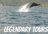 From Santo Domingo: Famous Whale Samana and Cayo Levantado Beach with Whale Biologist. Santo Domingo, DOMINICAN REPUBLIC