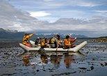 Eco aventura de dia inteiro à Ilha Gable no Canal de Beagle. Ushuaia, ARGENTINA