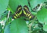 Visita guiada Monteverde Butterfly Gardens en Costa Rica.. Monteverde, COSTA RICA