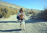 La pingüinera El Pedral y excursión al rancho patagónico en Puerto Madryn. Puerto Madryn, ARGENTINA