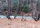 Menalon Trail 75km- All inclusive, Kalamata, GRECIA