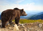 Bear Sanctuary and Bran Castle with a Professional Licensed Guide—Day Trip, Brasov, RUMANIA
