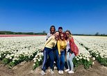 Small Group Tulip and Spring Flower Fields Bike Tour. Alkmaar, HOLLAND