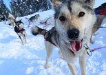 Excursión de día completo con un trineo de perros en Willow. Anchorage, AL, ESTADOS UNIDOS