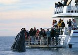Hervey Bay Whale Watching Cruise. Hervey Bay, AUSTRALIA