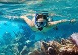 Excursión de esnórquel en Cozumel: Arrecifes Palancar, Colombia y Cielo. Cozumel, MEXICO