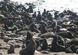 Explorer Cape Cross seal colony Day Tour, Swakopmund, NAMIBIA