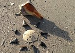 Shell Hunting Expedition on Morris Island, Charleston, SC, ESTADOS UNIDOS