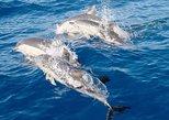 Tour Port Stephens de Sydney: 4WD, sandboard, golfinhos. Port Stephens, Austrália