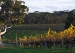 Barossa Valley with Hahndorf Tour from Adelaide. Adelaida, AUSTRALIA