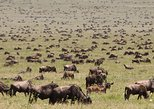 8 Days tanzania wildlife safari, Arusha, Tanzânia