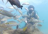 Beginner Scuba Diving Tour. Panama City Beach, FL, UNITED STATES