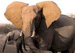 Fully inclusive Pilanesbserg Eco-safari from Johannesburg, ,