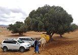 Day Trip to Mini Sahara, Agadir, MARRUECOS