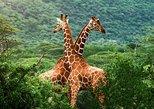 Safari de lujo en Tanzania de 6 días con alojamiento en los lugares más destacados. Arusha, TANZANIA