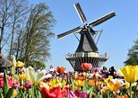 Keukenhof Gardens Half-Day Tour from Rotterdam. Rotterdam, HOLLAND