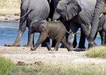 3-Day, All-Inclusive Etosha Wildlife Safari in Namibia, Windhoek, Namibia