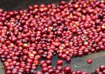 Specialty Coffee 101, History - Processing - Professional Cupping and More!, Boquete, PANAMÁ