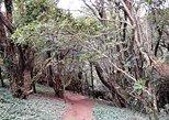 Hiking in Sintra-Cascais Natural Park. Cascais, PORTUGAL