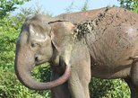 Private Half Day Safari in Udawalawe National Park, ,
