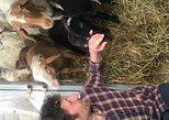 Family Farms of Montefalco, Assisi, ITALIA
