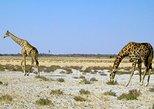 8-Day Sossusvlei, Swakopmund & Etosha National Park (Camping),