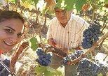 premium wine tour from Albufeira. Albufeira, PORTUGAL