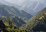 Jamaica Blue Mountain Guided Nature Tour,