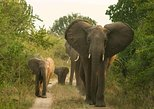 3 Days 2 Nights Queen Elizabeth National Park. Kampala, UGANDA