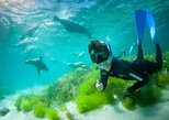 Half-Day Sea Lion Snorkeling Tour from Port Lincoln. Port Lincoln, AUSTRALIA