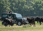 Camargue VIP 4x4 Safari from ARLES, Arles, França