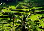 Bali Full-Day Traditional Village Sightseeing Trip with Lunch. Bali, Indonesia