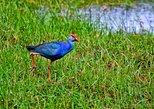Muthurajawela Bird Watching Tour. Negombo, Sri Lanka