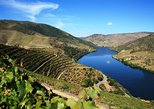 Douro Valley with Wine Tastings and Lunch from Porto. Oporto, PORTUGAL