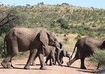 Joanesburgo para o Safari de meio dia no Parque Nacional de Pilanesberg,