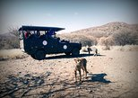 Cats Unlimited & Game Drive. Windhoek, Namibia