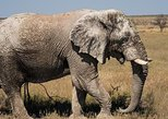6-Day Dunes and Wildlife Tour from Windhoek,