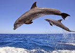 Dolphins Island Cruise. Side, Turkey