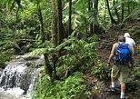 Excursión de medio día en el Bosque Nacional El Yunque,