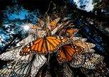Monarch Butterfly Sanctuary Private Tour from Mexico City, Ciudad de Mexico, MÉXICO