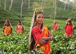 3-Day Srimangal Tour, Sylhet, BANGLADES