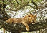 Safari de 3 días en el Parque Nacional Tarangire, Parque del Lago Manyara, y el cráter de Ngorongoro desde Arusha. Arusha, TANZANIA